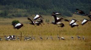 19 cranes