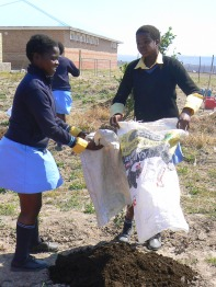 Students empty sacks of manure, collected from a nearby cattle kraal, onto the garden soil