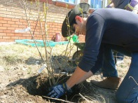 Students planted perennials as well as seedlings.